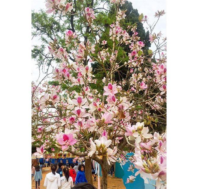 Good Morning from Lebanon 🇱🇧 ... springbreak spring springtime ...
