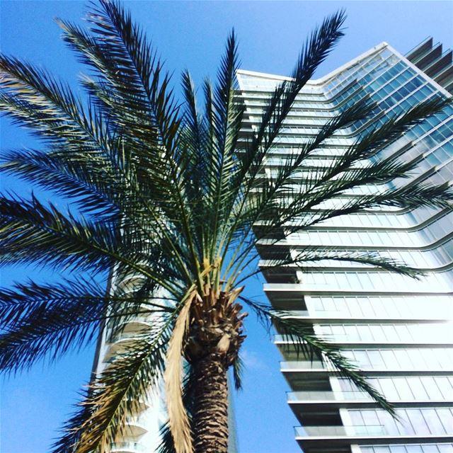 Zeitunay bay 🌴.. palmtree livelovelebanon Travelgirl ... (Beirut, Lebanon)