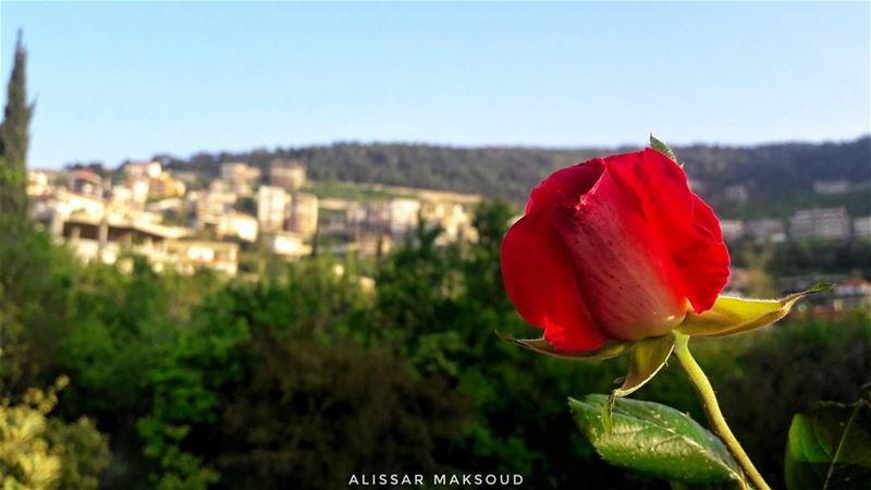 """"""" إن الجميل وإن طال الزمان فليس يحصد الا الذي يزرعا."""" 💫💫💫💫💫💫💫💫💫💫 (Bakhoun, Liban-Nord, Lebanon)"""