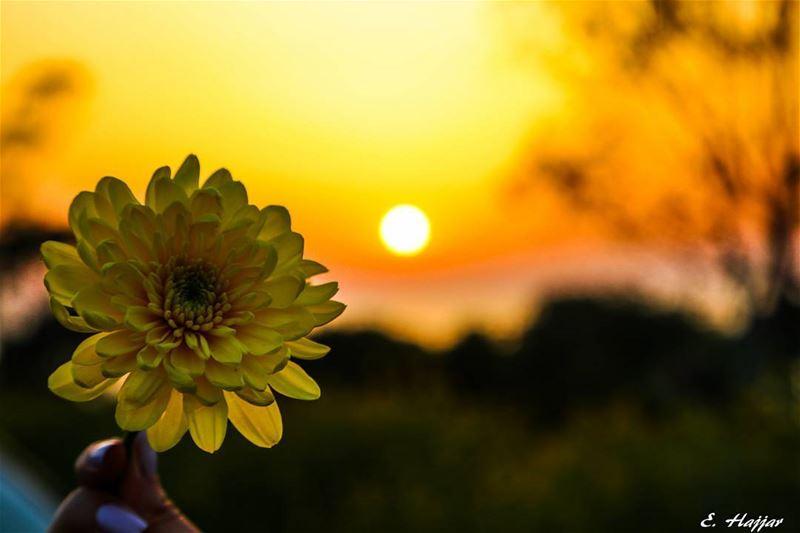 The poetry of earth is never dead - John KeatsCanon 6D - 24 105mm f4... (Jiyyeh)