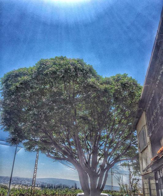 انني غصنٌ اذا مرّت على أوراقي الريحُ انحنيتُ livelovetyre lebanon ... (Al Qulaylah, Al Janub, Lebanon)