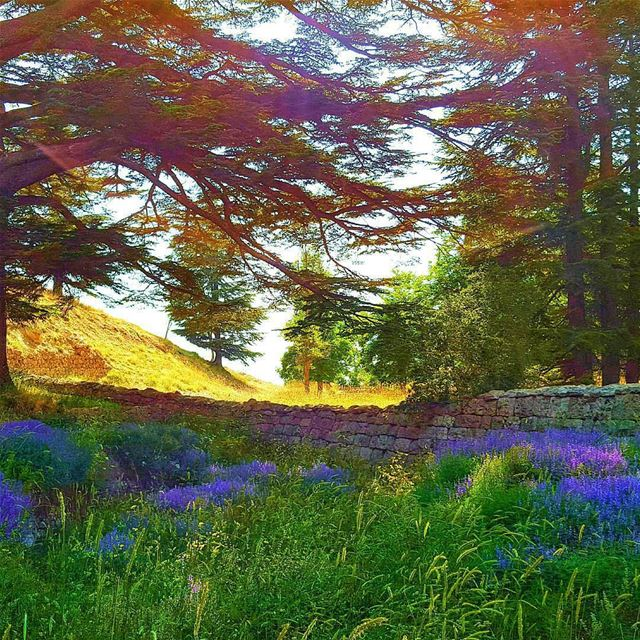 Mother Nature is all about perspective and to let your eyes sees beauty... (Cedars of God)