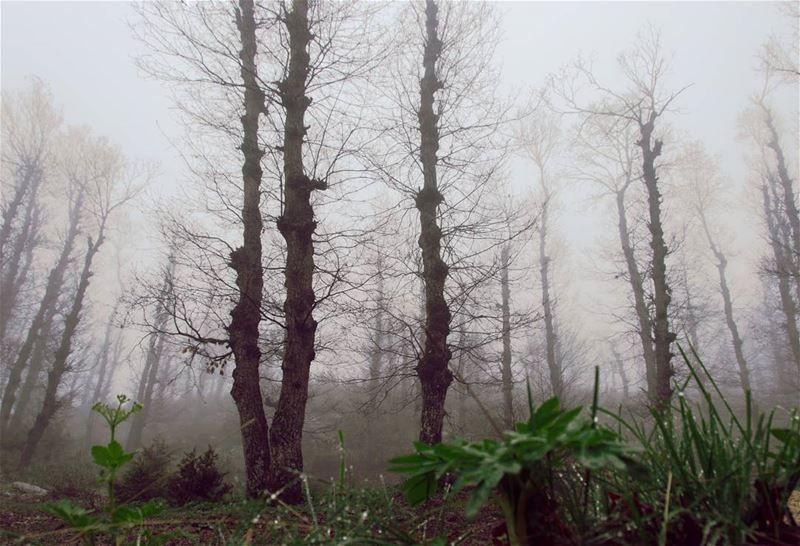 beyond the fog lies clarity.... forest trees fog intothewild clouds... (Fnaydek Akkar)