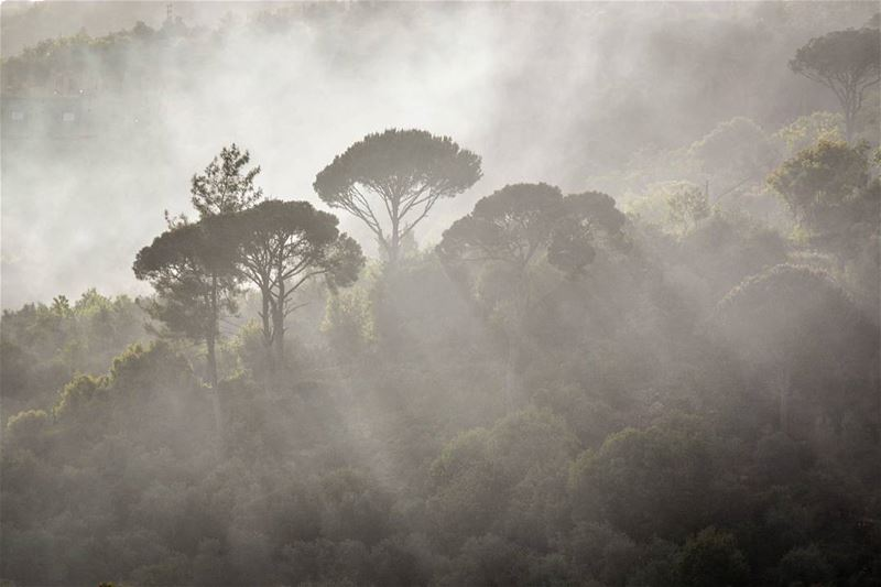 .A foggy morning | Remhala, Lebanon. Evening dear IGers and have a great... (Horch Remhâla)