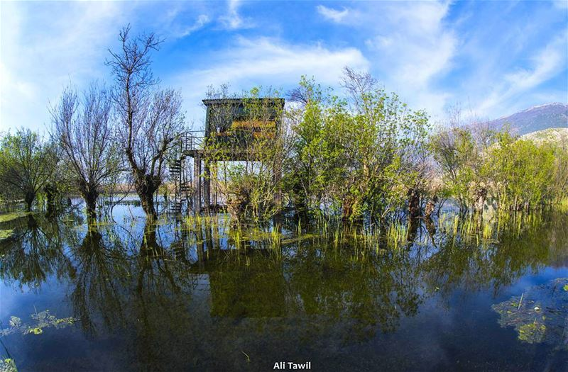 nature wetlands nikon d810 phototips fisheye reflection beautiful ... (`Ammiq, Béqaa, Lebanon)