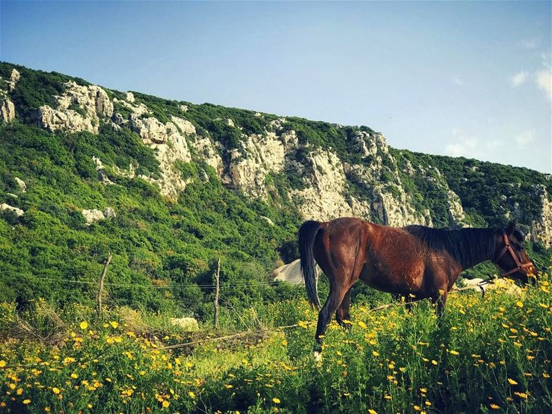 """Here I am... This is me"" Spirit the stallion........ horse ... (Batrouun)"