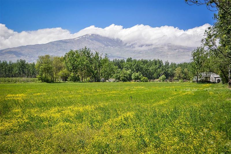 .Amazing Spring nature! Bekaa,Lebanon. Good evening dear IGers and have a... (Deïr Taanâyel, Béqaa, Lebanon)