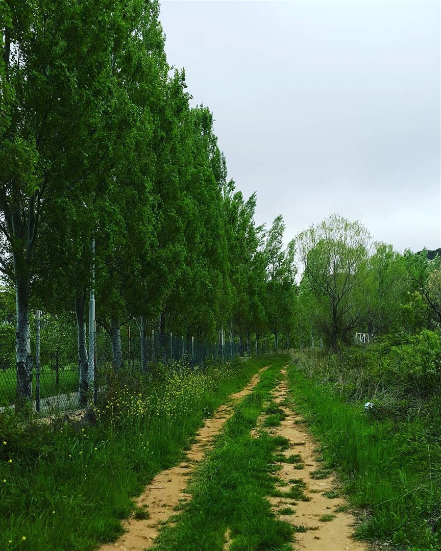 on my road home spring green places photooftheday loves_lebanon ... (Chbânîyé, Mont-Liban, Lebanon)