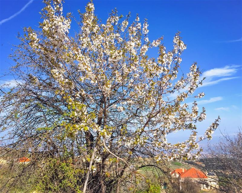 May your week be brightened with blossoms of hope, happiness & positivity � (Ehden, Lebanon)
