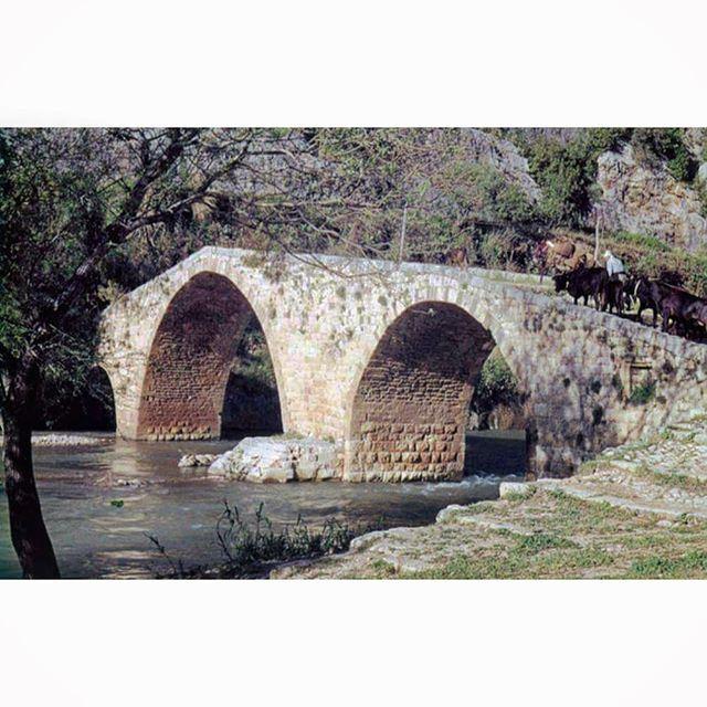 نهر الكلب عام ١٩٥٢ ،