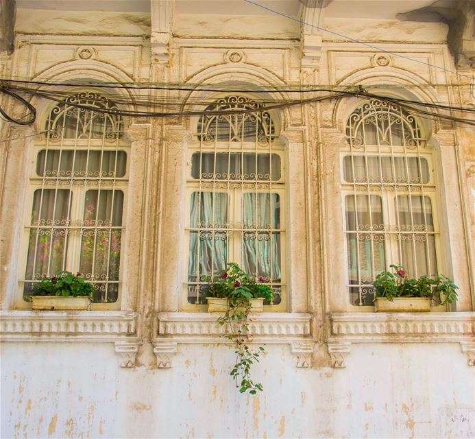 Good morning 🌺 beirut lebanon old house window spring flowers pot...