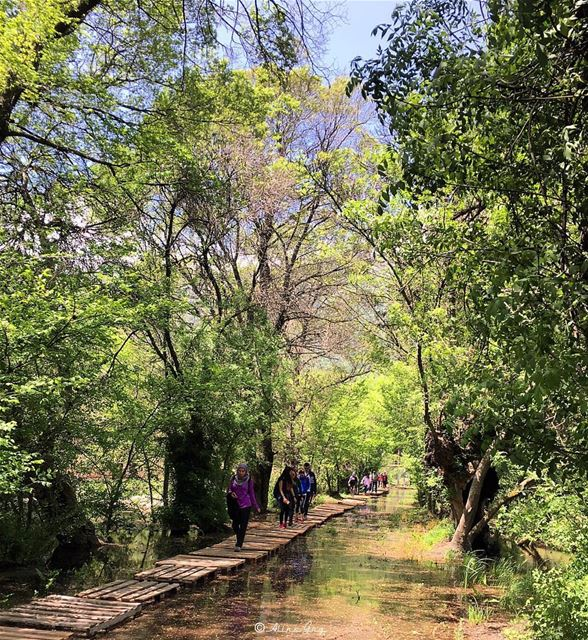 The Water Trail 🌳🦋🐸🐝 ammiq wetlands hiking guide groups trail ... (`Ammiq, Béqaa, Lebanon)