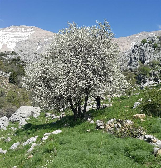 With arms wide open spring  mountains  livelovelebanon  livelovesports ...
