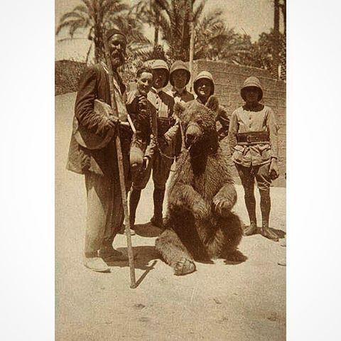 Bear Show Beirut in 1925 .