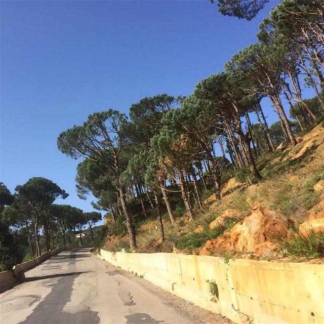 naturephotography naturelovers naturegram nature pinetrees road ... (Bologne, Mont-Liban, Lebanon)