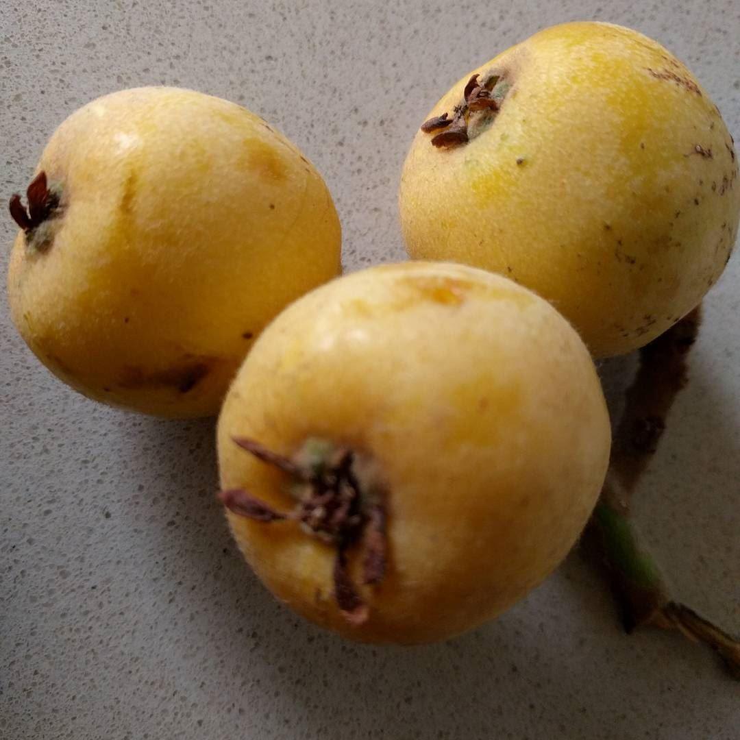 loquat loquats loquatseason fruit fruits freshfruit spring ...