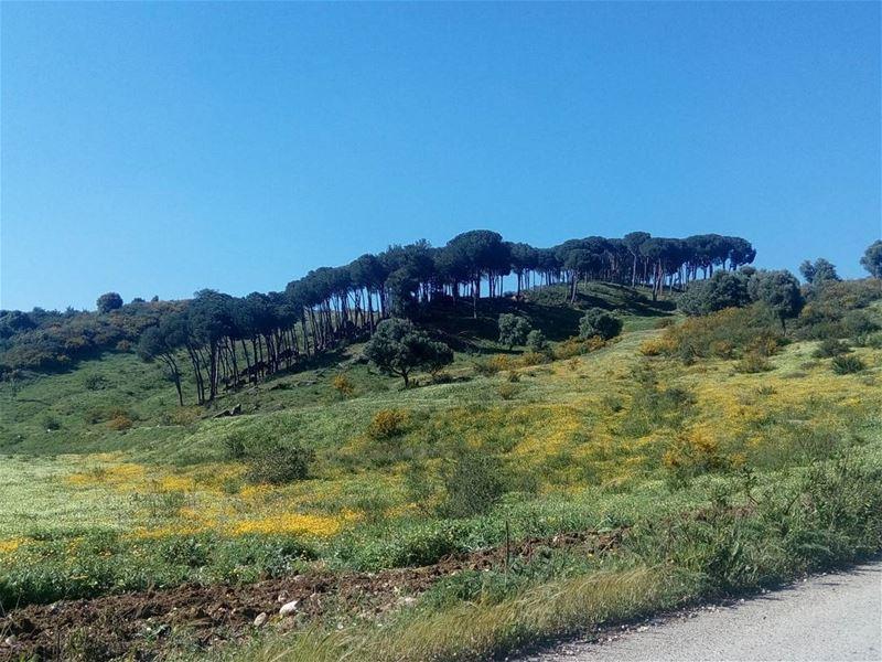 nature naturebeauty spring janoub ... (Al janoub-Lebanon)