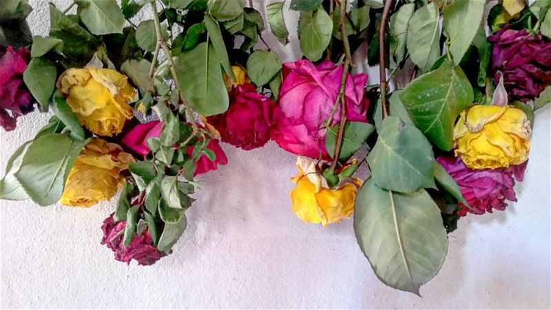 Colours 😻 flower flowers colours colouredflowers pink red yellow green...