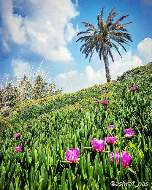 من وين الحلوة العليانة ع الورد وأكترتتموّج مثل النِيسانة بجبال العنبر...ب (Tyre, Lebanon)