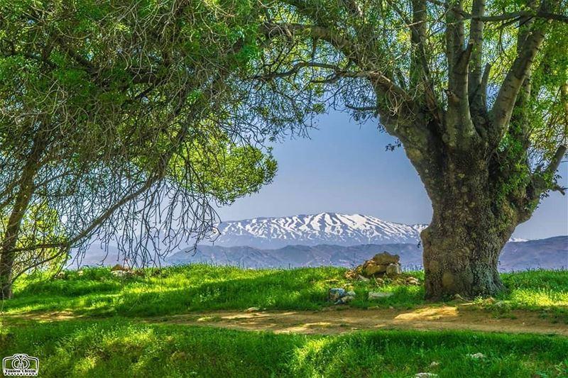 أسعد الله مساءكم بكل خير عميق البقاع ammiq ammiqreserve nature ...