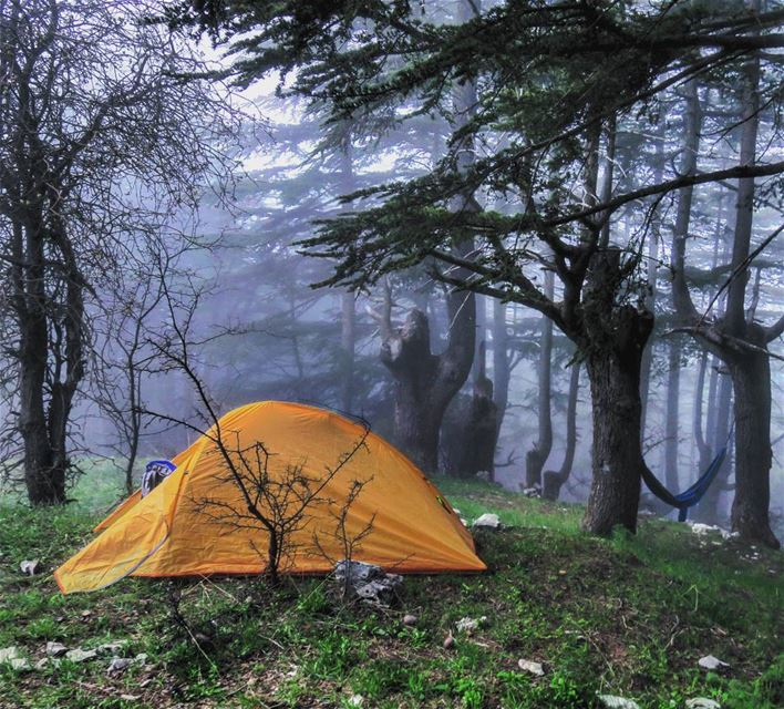 Sleeping in heavenly peace🌲🏕🌫 camp tent forest mist fog hike ...