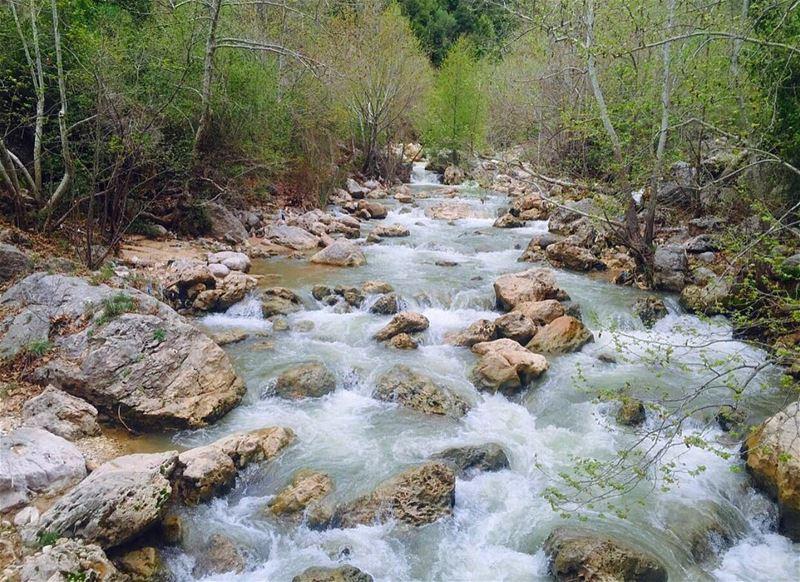 tb river trees water nature lebanon kfardebian northlebanon instalebanon... (Kfardebian)