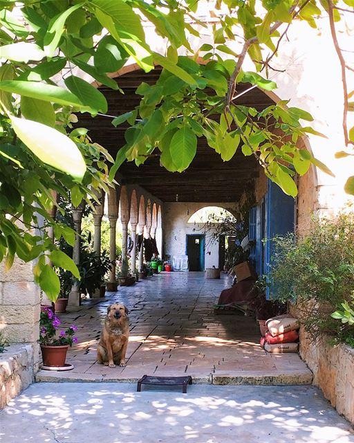 "A new ""good old friend"" 🌿🐶 (Aïn Anoub, Mont-Liban, Lebanon)"