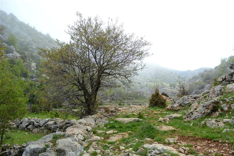 Forget not that the earth delights to feel your bare feet and the winds... (Tannurin At Tahta, Liban-Nord, Lebanon)