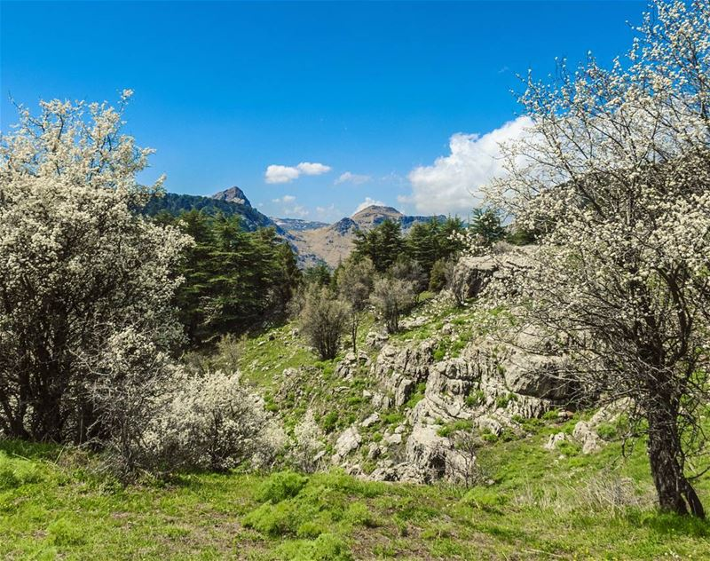 Happy Weekend 🌞 outdoors weekend spring mountains blossom hike ... (Tannourine Cedars Nature Reserve)