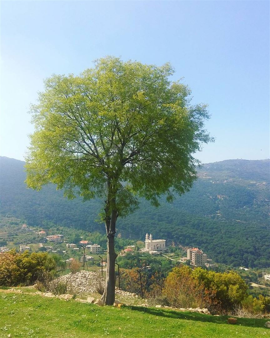 trees  treelovers  alonenotlonely mothernature  livelovelebanon ... (Jezzîne, Al Janub, Lebanon)