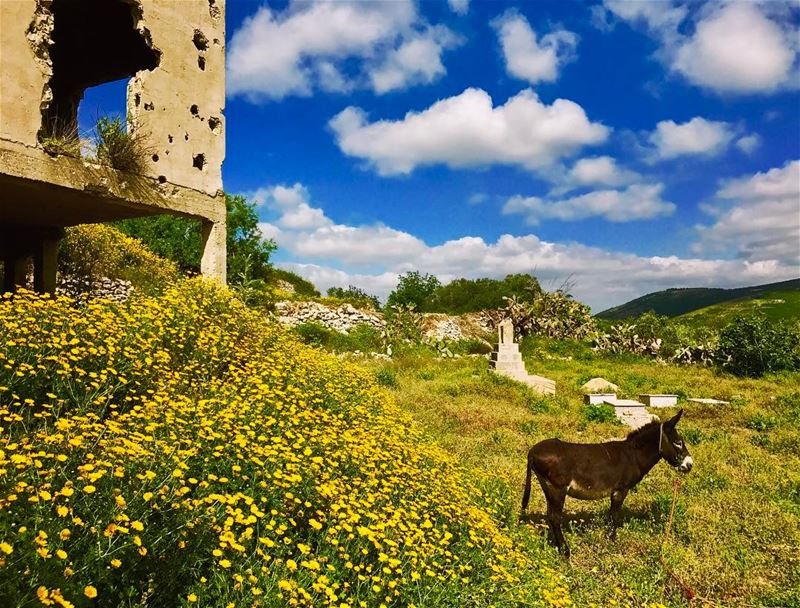 It's Friday 😎!....... naturelovers livelovelife liveloveworld ... (South Governorate)