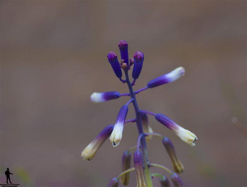 macro macrophotography macro_x macroflower nature colors jbaa ...