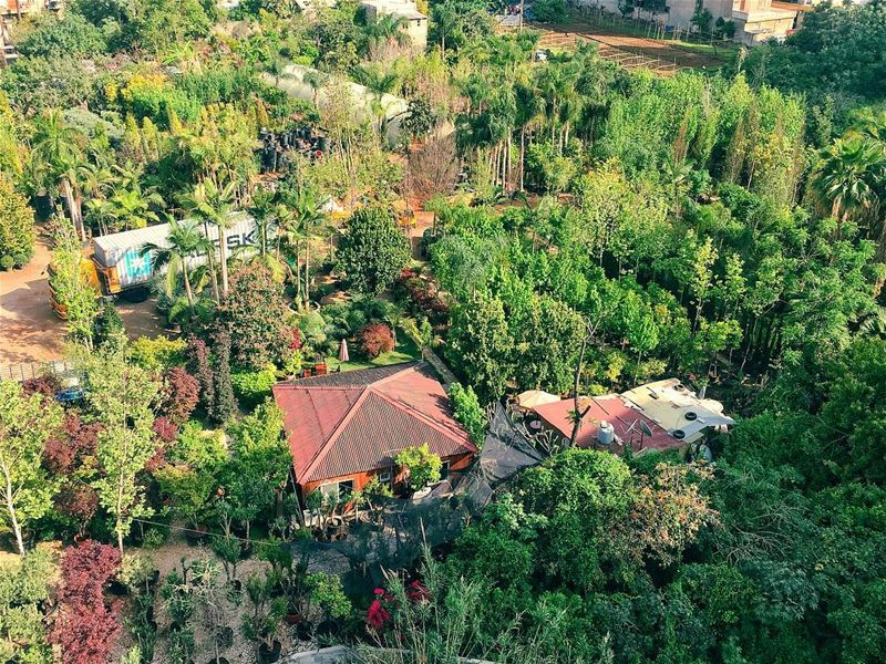 A forest within the city. antelias lebanon flowers nature garden ... (Antilyas)