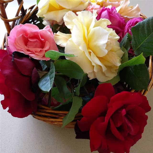 mygardentoday garden flowers gardening spring springstyle roses ...
