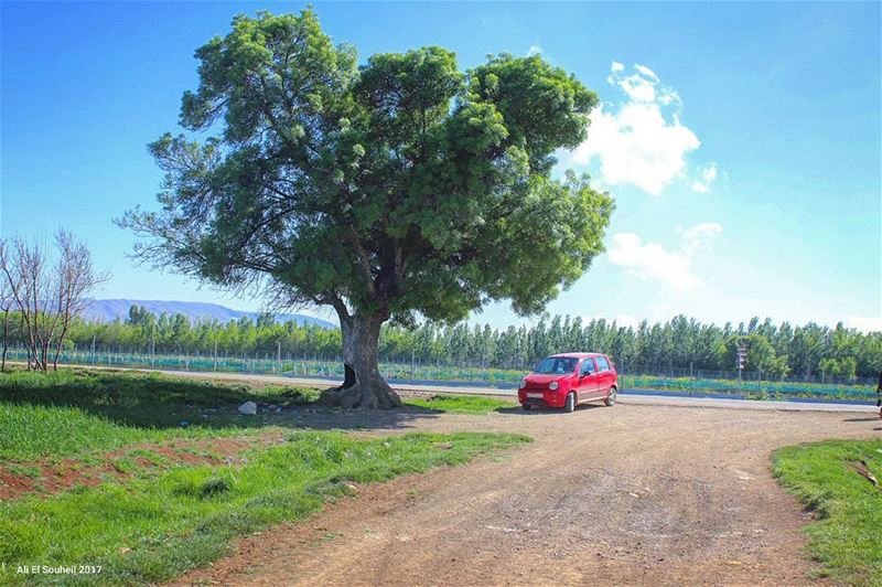 tb ammiq westbekaa bekaa tree valley red car sky colors spring... (`Ammiq, Béqaa, Lebanon)