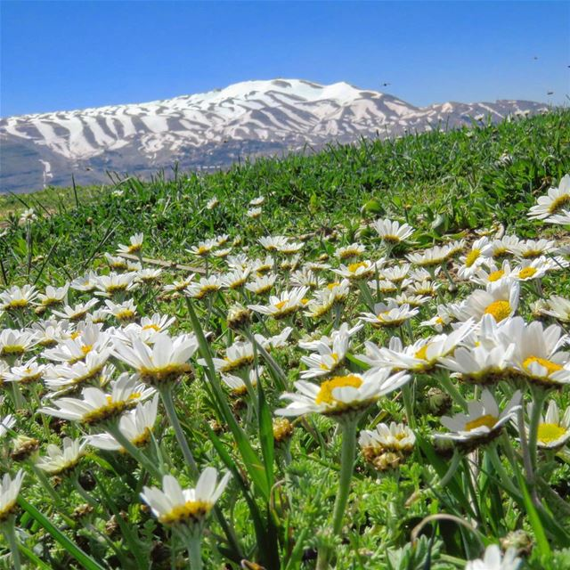 Lay back down. Sink in the moment. 🌞🏔🌼 hike spring grass flowers ...