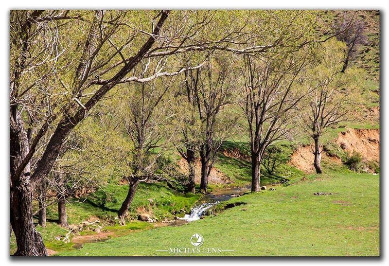 livelovelebanon landscape discover961 lebanonbylocal ...