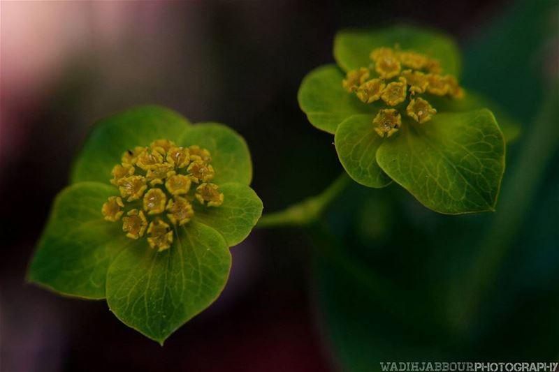 🔸🔸🔸🔸🔸🔸🔸 earthpix macromood macroclique Macro_Vision ...