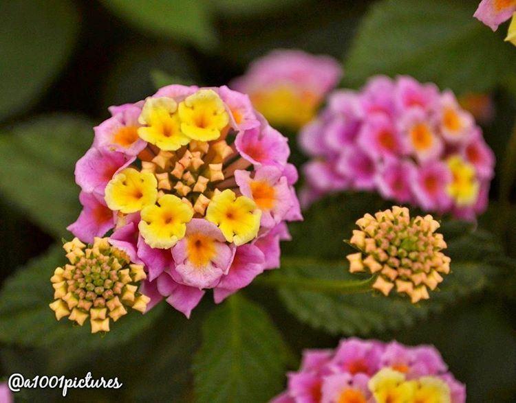 It's a beautiful morning 🎶🎶.... photos photography flower nikon ... (Somewhereinlebanon)