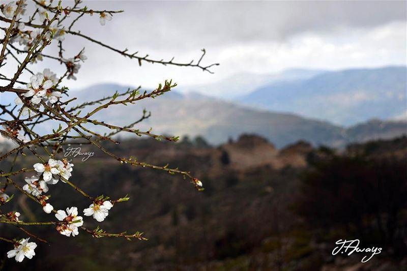 وتميل عالمرج الأخضر خيرات عم تنمى وتكبر - صباح لبنان lebanon spring... (Bmahray, Mont-Liban, Lebanon)