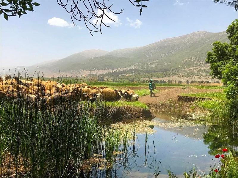 Hues of blue and green🐑🍃 Lebanon tb travel travelgram traveler... (West Bekaa)