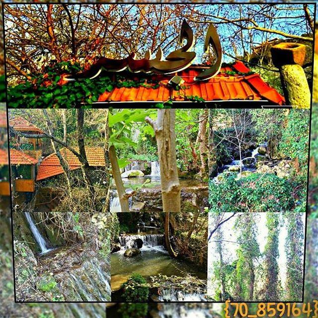 river leaf🍃 green el_jesserr✌ water instagood lebanon ❤ waterfall ... (Deir Doureet, Mont-Liban, Lebanon)