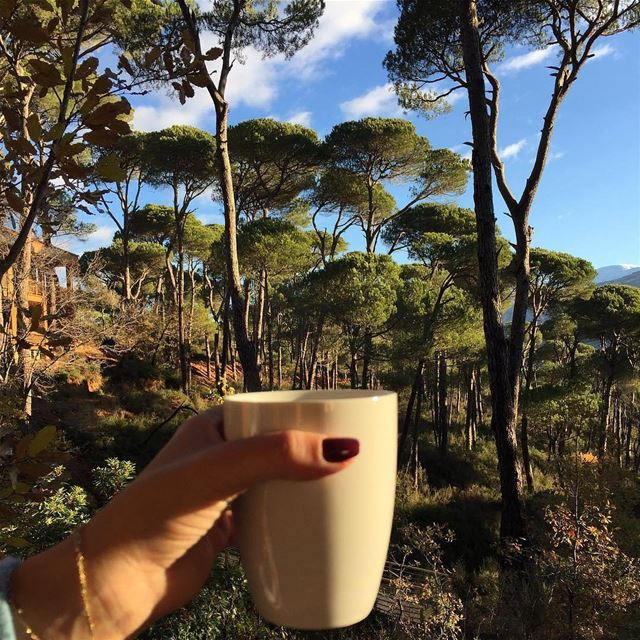Begin your day with a cup of coffee in the middle of wilderness! ☕🌳 Photo...