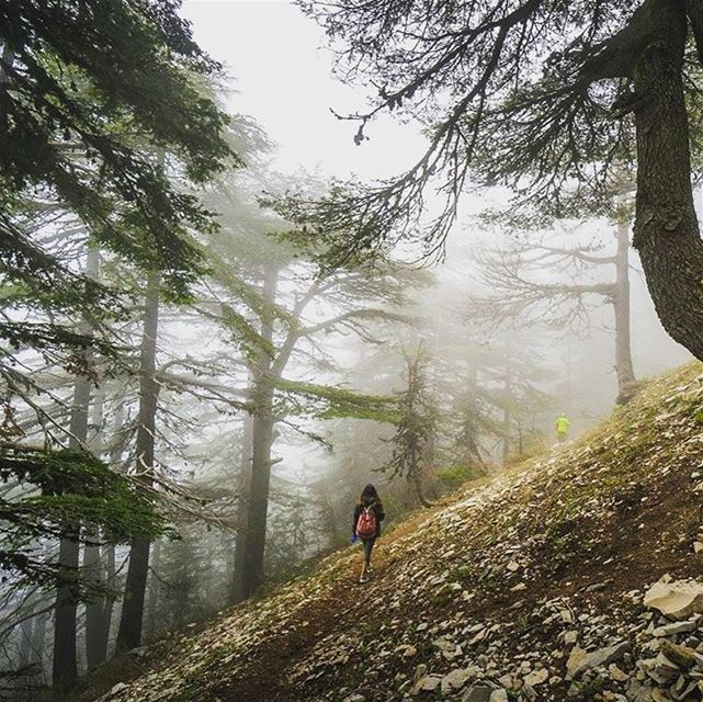 From nature, to nature ❤️taken by @batlounis lebanon hiking ehden @live