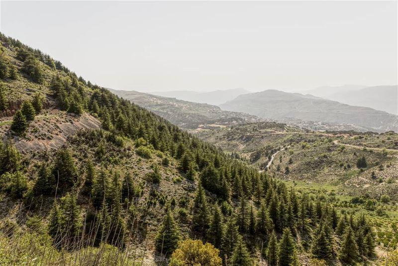 shouf cedars cedar lebanon nature landscape ... (Shouf Biosphere Reserve)