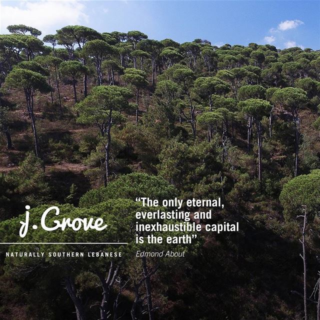 Happy International Mother Earth Day! 🌳🌳 Quote  QuoteOfTheWeek  jGrove ...