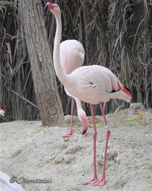 تصويري عدستي لبنان بيروت الامارات الشارقة دبي العين عمان جدة الا (Flamingo Billiards)