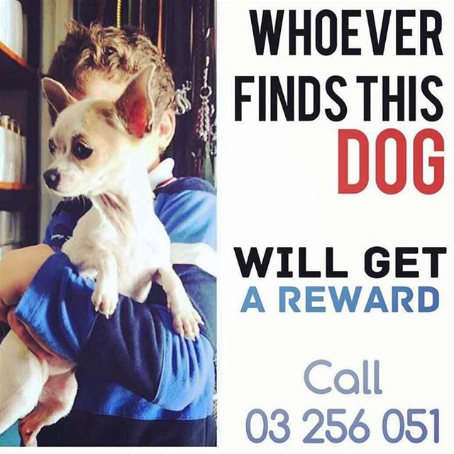 Lost dog. If found please call number 03-256 051 . Can you re post if you...