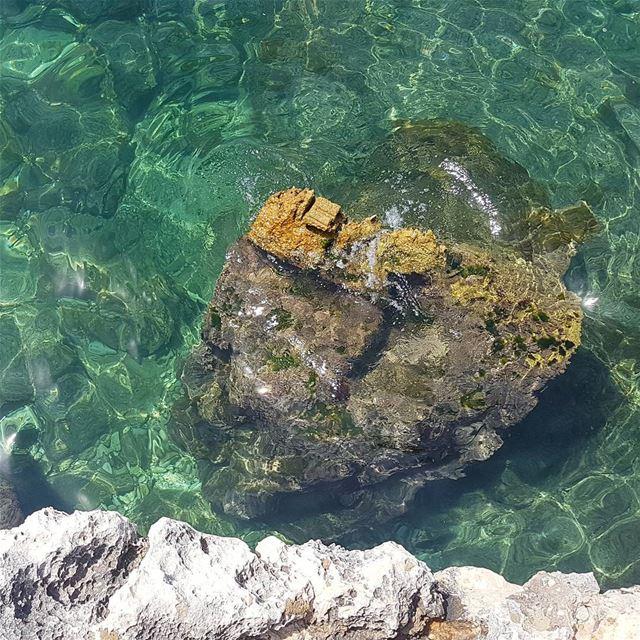 Crystal clear sea! loves_lebanon super_lebanon ig_lebanon ... (Ta7t El Ri7 - Anfeh)