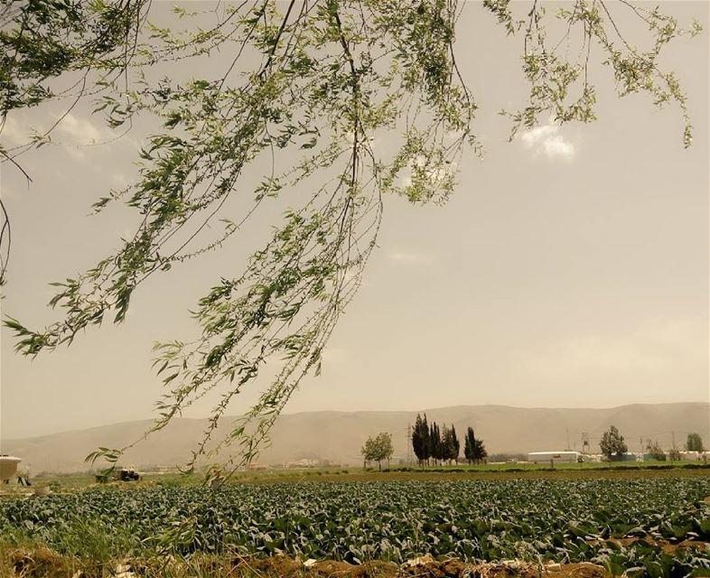 シAweSomeNesSツ myshot. sun sky photographer photography trees...